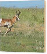 Run  Light Buck  Run Wood Print