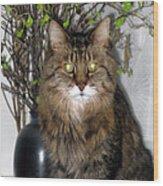 Runcius- Palm Sunday Kitty Wood Print