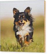 Running Chihuahua Wood Print