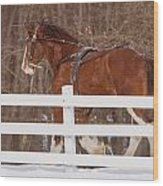 Running Clydesdale Wood Print