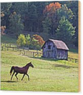 Running Horse And Old Barn Wood Print