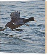 Running On Water Series 5 Wood Print