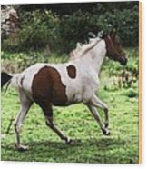 Running Pinto Horse Wood Print