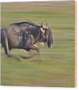 Running Wildebeest IIi Wood Print