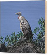 Ruppells Griffon Vulture Wood Print