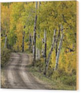 Rural Forest Service Road Wood Print