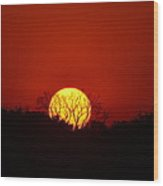 Rural Sunset  Wood Print