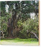 Ruskin Oak - Ocean Springs Wood Print
