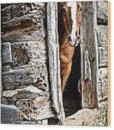 Rustic Horse Scene Wood Print