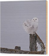 Rustic Snowy Perch Wood Print