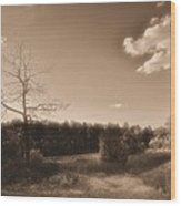 Rustic Wood Print by Thomas  MacPherson Jr