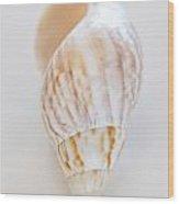 Rusty Dove Shell Wood Print