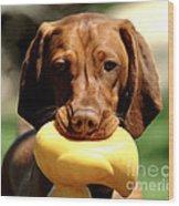 Rusty Has A Duck Wood Print