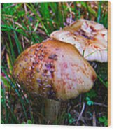 Rusty Mushroom Wood Print