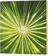 Rusty Reeds Wood Print