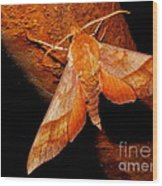 Rusty Sphinx Moth Wood Print