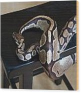 S Is For Snake Wood Print