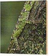 Sabah Eyebrow Lizard Mt Kinabalu Np Wood Print by Ch'ien Lee