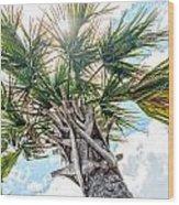 Sabal Palmetto Wood Print