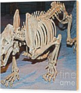 Saber-toothed Cat Wood Print