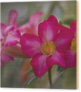 Sabi Star - Desert Rose Garden Of Dreams Hawaii Wood Print