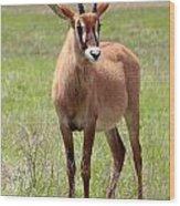 Sable Antelope Calf Wood Print