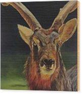 Sable Antelope Wood Print