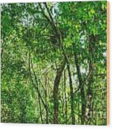 Sacred African Rainforest Wood Print