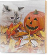 Sacred Cat Of Burma Halloween Wood Print