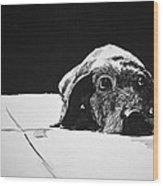 Sad Dog Wood Print