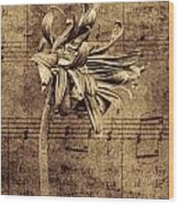 Sad Song In Sepia Wood Print