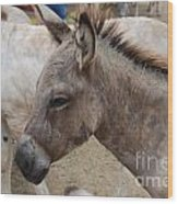 Sad Wild Donkey Wood Print