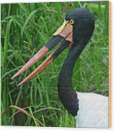 Saddle Billed Stork-00139 Wood Print