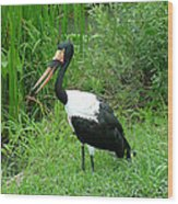 Saddle Billed Stork-136 Wood Print