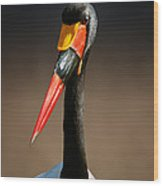 Saddle-billed Stork Portrait Wood Print