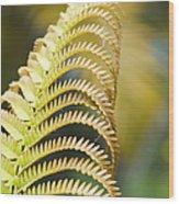 Sadleria Cyatheoides Amau Fern Maui Hawaii Wood Print