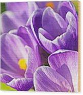 Saffron Flowers. Wood Print