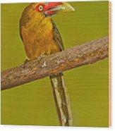 Saffron Toucanet Wood Print