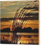 Sage Grass Sunset Wood Print