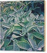 Sage In The Garden Wood Print