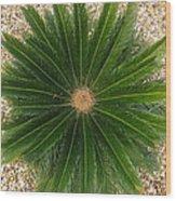 Sago Palm Wood Print