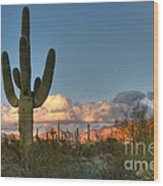 Saguaro At Sunset Wood Print