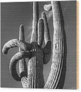 Saguaro Cactus Monochrome Wood Print