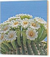Saguaro Flowers On Top Wood Print