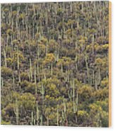 Saguaro Forest At The Foot Of Four Peaks Wood Print