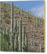Saguaro Forest In The Superstitions Wood Print