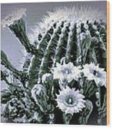 Saguaro In Bloom Wood Print