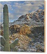 Saguaro National Park Winter Morning Wood Print
