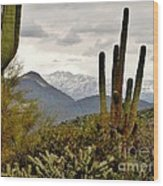 Saguaro Sentinels Wood Print