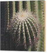 Saguaro With New Arm Wood Print